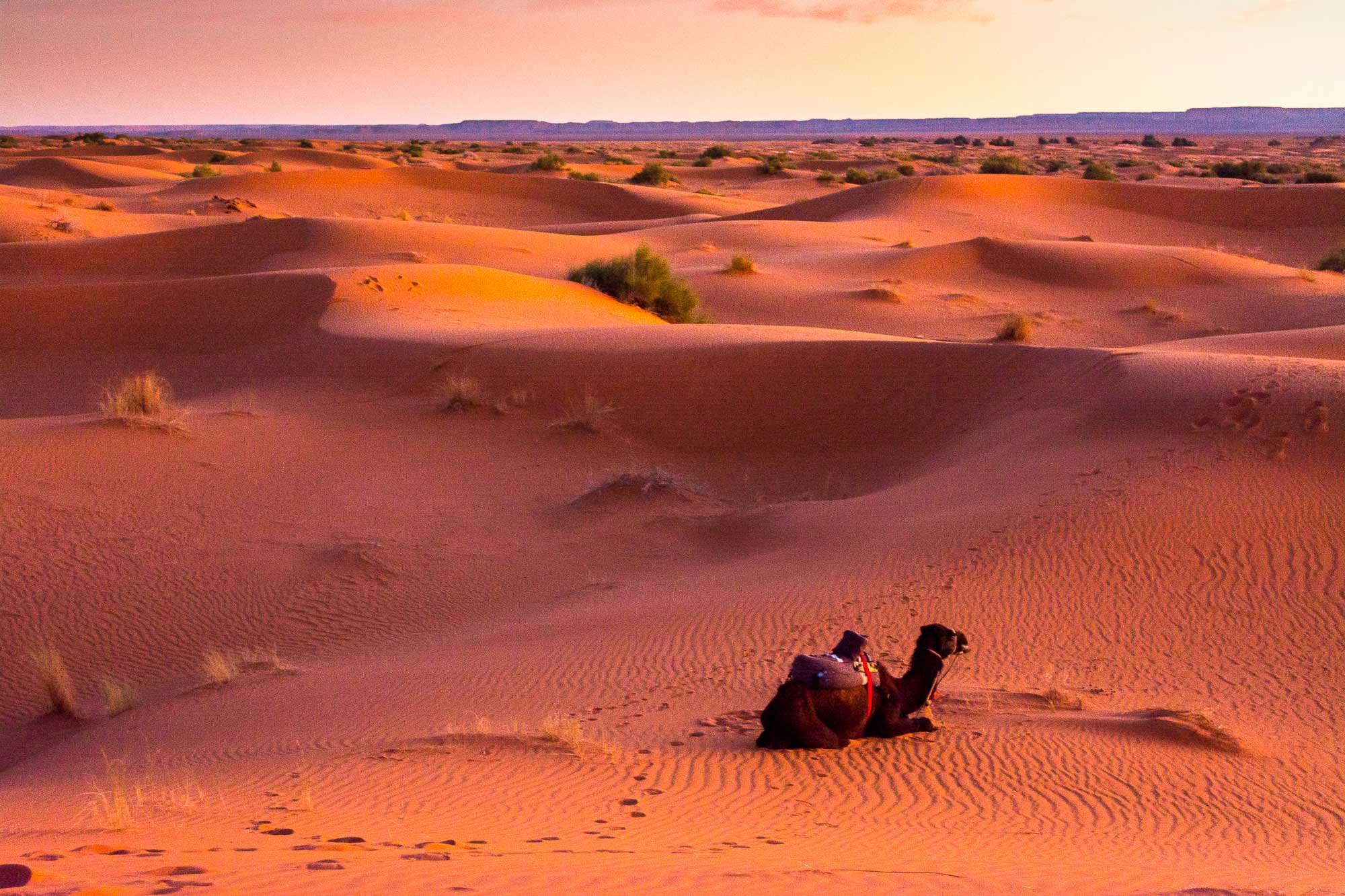 things you should know about traveling to desert
